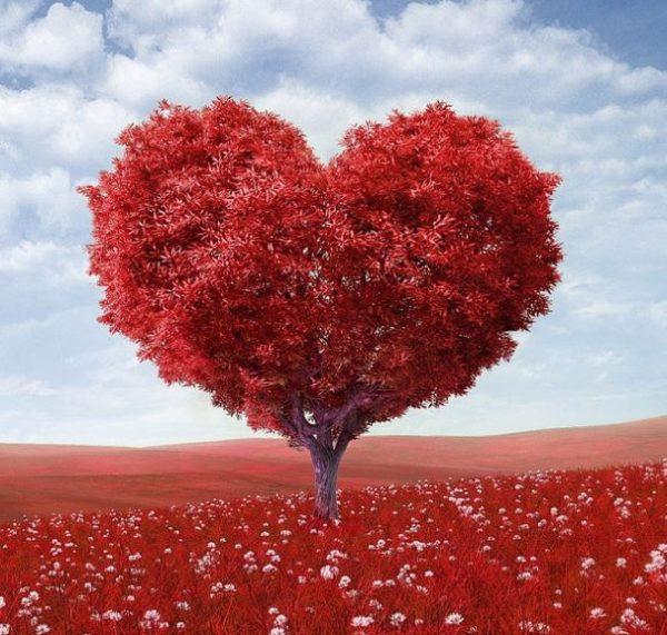 Bonne fête aux amoureux !
